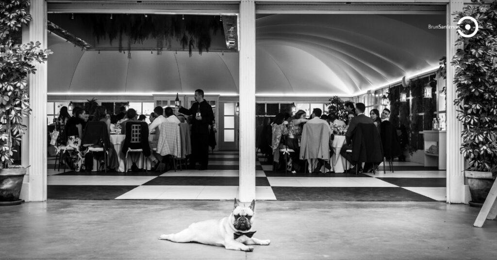 perro en tu boda